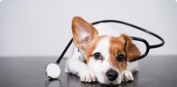 Ветеринарная форма иммунофан